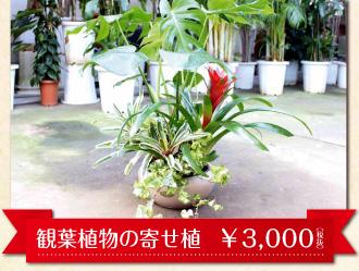 ドヰ植物園